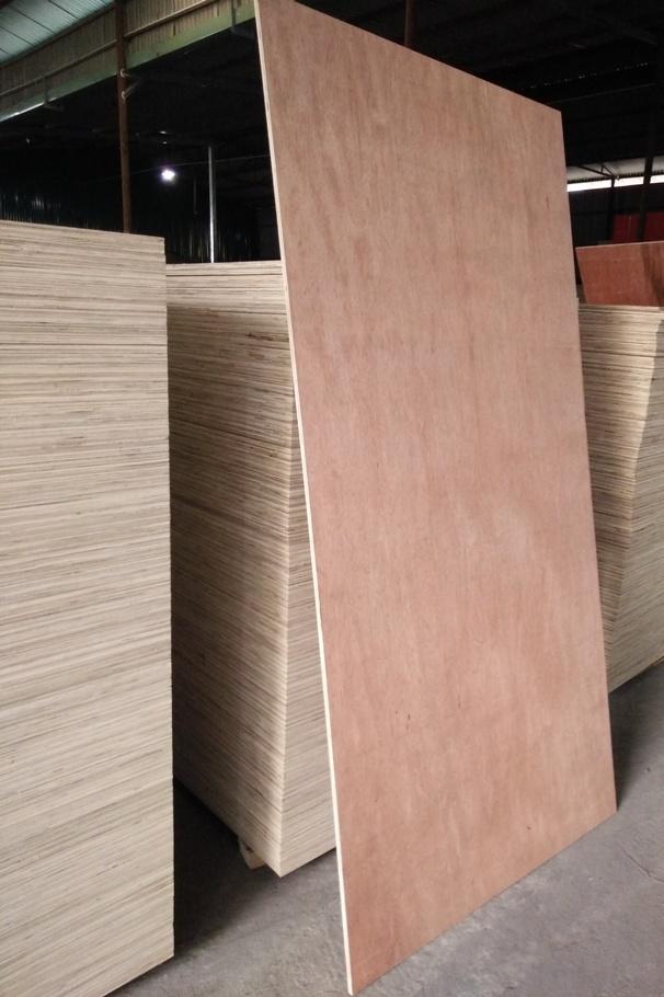 Plywood Bintangor face/back - Haiphuplywood vn